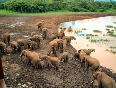 569 Kenya Migration & Great Rift Valley Lakes Safari