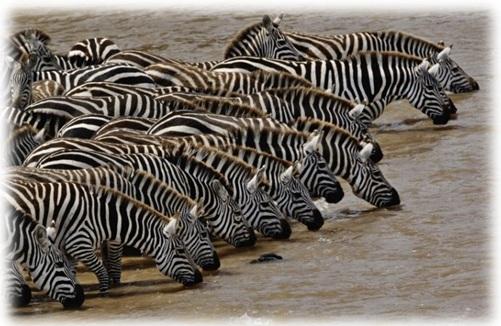 572 Kenya Migration & Great Rift Valley Lakes Safari