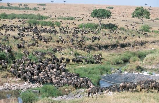 573 Kenya Migration & Great Rift Valley Lakes Safari