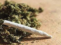 Marijuana increases likelihood of testicular cancer