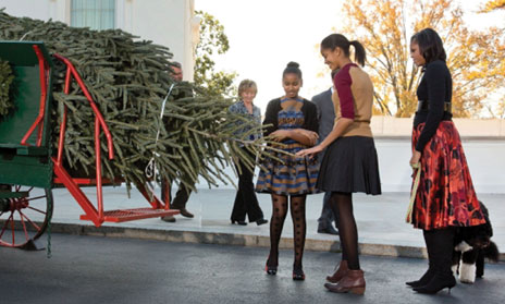 white house christmas tree  WHITE HOUSE CHRISTMAS TREE ARRIVES