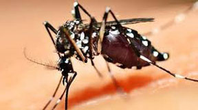 Moaquito-borne-virus