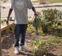 Urban gardening growing in South Florida