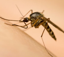 Mosquito- borne virus spreads in Haiti