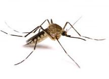 Department Of Health Daily Zika Update