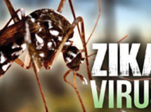 Miami-Dade mosquitoes test positive for Zika