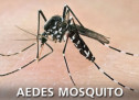 Protect yourself and your family from Aedes mosquito