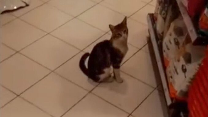 Cat Cons People Into Buying it Food in a Supermarket